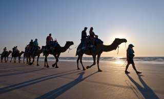 1920x1160_Camels